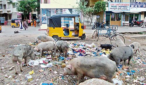 Pig Menace